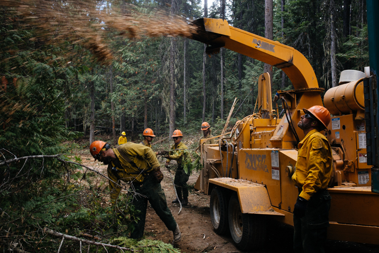 Members of the Helena Hotshots haul and chip green timber cut from the edges of a Forest Service road in Kootenai National Forest north of Libby, Montana in September 2018. Wildland firefighters often fell living trees in order to eliminate fuel that allows wildfires to spread. Standing dead trees pose more of a risk than green trees.
